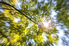 夏天晴朗的树爆炸 颜色女儿图象母亲二 库存图片