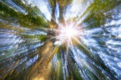 夏天晴朗的树爆炸 颜色女儿图象母亲二 免版税库存图片
