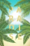 夏天晴朗的热带天堂 与棕榈叶backgr的海岸 图库摄影