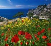 夏天黑海 免版税库存照片