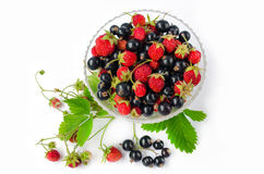 夏天维生素-黑醋栗和野草莓在叶子和束围拢的一个玻璃杯子 查出 顶视图 库存图片
