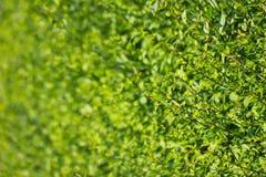 夏天绿色射击墙壁  免版税库存图片