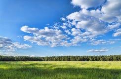 夏天绿色草甸风景森林 免版税库存图片