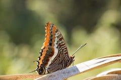 夏天蝴蝶用桔子定调子北西班牙 免版税库存照片