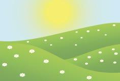 夏天camomiles领域 免版税库存图片