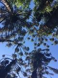 夏天Palmtrees 库存图片