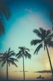夏威夷减速火箭的日落棕榈树 免版税图库摄影
