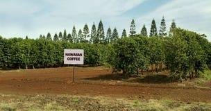 夏威夷咖啡农场。 免版税库存照片