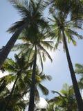 夏威夷在海滩的棕榈树 免版税库存图片