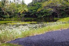 夏威夷大岛的一个盐水湖  免版税库存图片