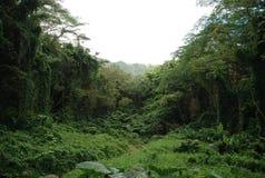 夏威夷密林 免版税库存照片