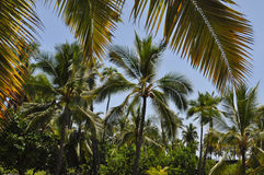 夏威夷密林 库存图片