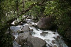 夏威夷小河 免版税库存图片