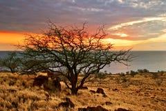 夏威夷日落结构树 库存照片