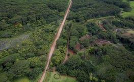 夏威夷森林 库存图片