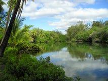 夏威夷池塘 库存照片