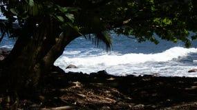 夏威夷海浪和树 免版税库存照片