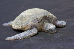 夏威夷绿浪乌龟 免版税库存照片