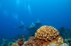 夏威夷背景珊瑚的潜水员 库存图片