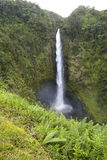 夏威夷风景:Akaka下跌瀑布 免版税库存图片
