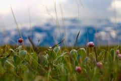 夏季在北极 免版税库存图片