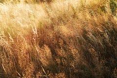 夏季的草 库存照片