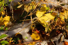 夏季的颜色在11月 免版税库存照片
