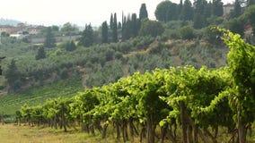 夏季,移动风在Chianti地区,托斯卡纳的绿色葡萄园 意大利 4K UHD录影 影视素材