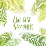 夏日与棕榈的字法海报 库存图片