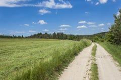 夏日和导致天际的森林的土路在背景中 蓝色覆盖天空 免版税库存照片