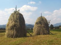 夏日在村庄 免版税库存图片