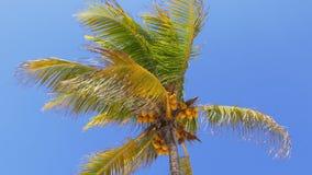 夏日太阳浅兰的天空迈阿密可可椰子4k美国 股票录像