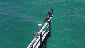 夏日迈阿密海湾通行证鹈鹕地方4k佛罗里达美国 股票视频