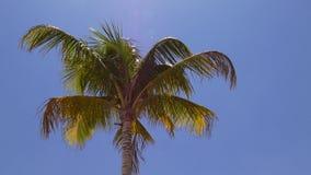 夏日迈阿密海滩可可椰子上面4k佛罗里达美国 股票视频