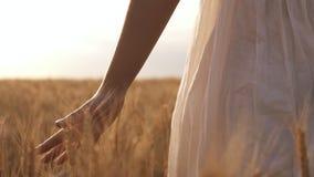 夏日,白色的妇女通过在清楚的宽领域的麦子跑 太阳光,白天 股票视频