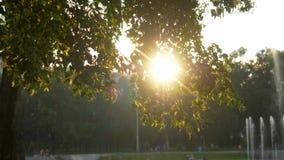 夏时的绿色公园在日落时间 库存图片