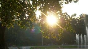 夏时的绿色公园在日落时间 免版税库存照片