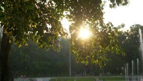 夏时的绿色公园在日落时间 图库摄影