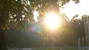 夏时的绿色公园在日落时间 免版税库存图片