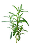 夏重薄荷开胃的菜肴hortensis植物,道路 库存图片