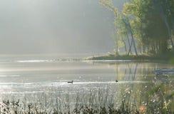 夏令时热 放松在镇静湖的两只鸭子在温暖的闷热的天浇灌 库存图片