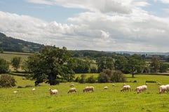 夏令时风景在英国乡下 免版税库存图片