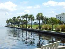 夏洛特港口棕榈树 免版税库存照片