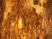 外壳木头 免版税库存照片