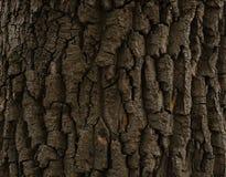 外壳300年橡木 免版税库存照片