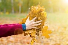 外套的美丽的妇女拿着秋叶 免版税图库摄影
