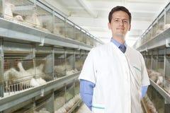 外科医生兽医 库存图片