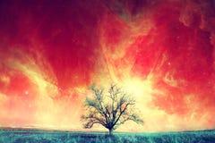 外籍人树背景 库存照片