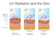 紫外辐射和皮肤 库存图片
