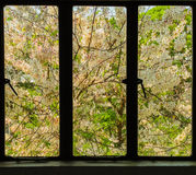 外部窗口看见美丽的花 免版税库存图片